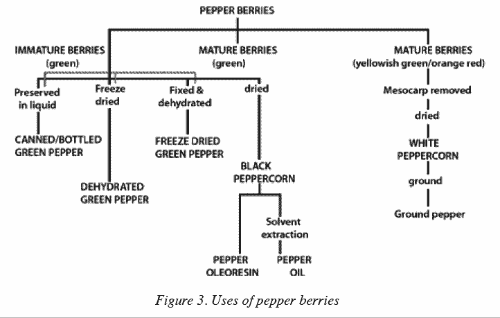 Chart Of The Uses Pepper Berries